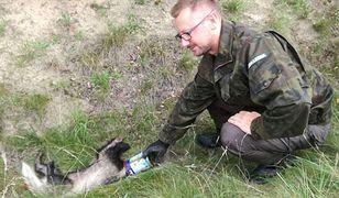 Leśniczy Artur Świder uratował borsuka