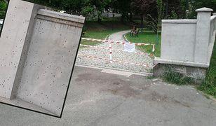 Inwazja bieronek azjatyckich w Katowicach