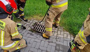 Lublin. Dzięki mieszkańcom i strażakom kawka została uwolniona