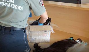Medyka. Zaskakujący towar na granicy. Ukrył cały karton (podkarpackie.kas.gov.pl)