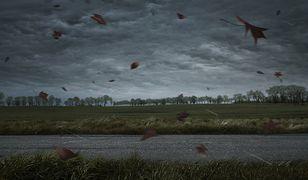 Groźne burze zagościły wczoraj w nocy nad Polską.