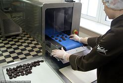 Praca marzeń. Szukają chętnych do degustacji czekolady