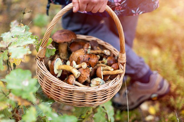 Polacy uwielbiają chodzić na grzyby