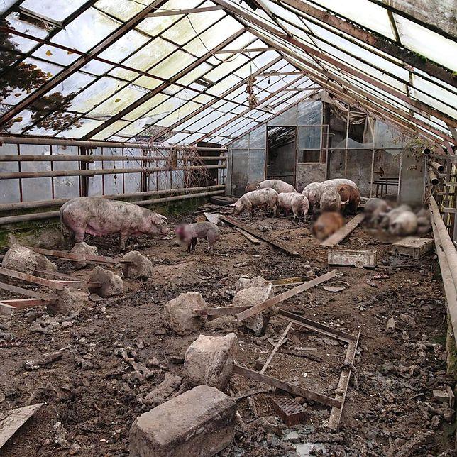 Małopolska. Zwierzęta trzymane w skandalicznych warunkach. 51-latek usłyszał zarzut