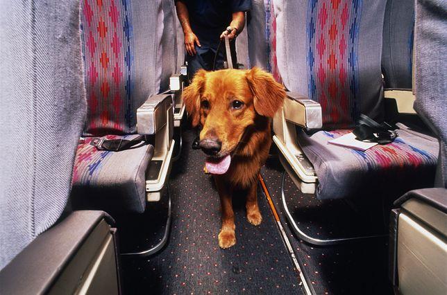 Pies w samolocie - zdjęcie poglądowe
