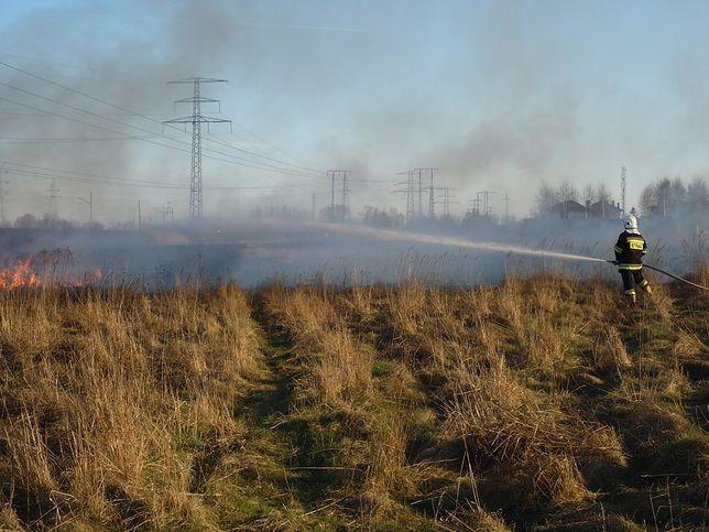 Za wypalanie traw grozi nawet 10 lat więzienia