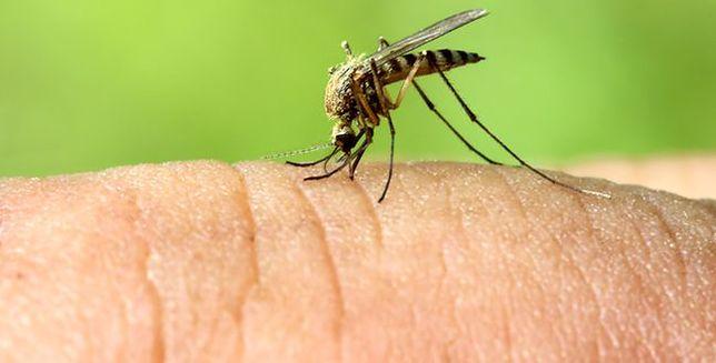 Gdzie się podziały w tym roku komary?