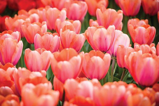 Kwiaty, kwiaty!