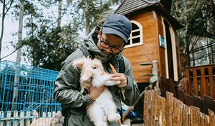 Większość z 60 ogrodów zoologicznych na terenie kraju może nie być w stanie wykarmić zwierząt