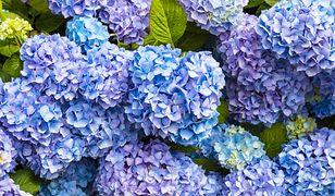 Najbardziej niezwykłe jesienne rośliny w ogrodzie. Czym zaskakują?