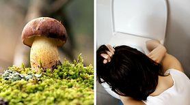 Kiedy jadalne grzyby stają się trujące? Błędy, które popełniają Polacy
