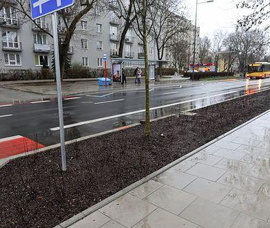 Warszawa. Saska eksploduje wiosenną zielenią. Tak chcieli warszawiacy