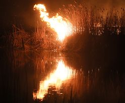 Płonie Biebrzański Park Narodowy. Chmura dymu dotarła do Warszawy