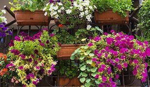 Aranżacja balkonu z wykorzystaniem pierwszych wiosennych kwiatów