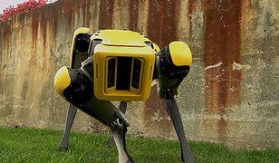 Tak wygląda robot-pies