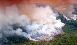 Pożary Puszczy Amazońskiej.