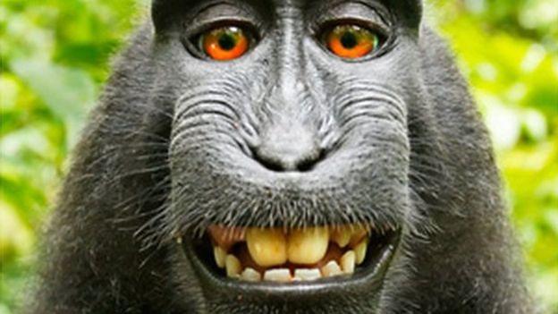 Pamiętacie fotografa, który walczył o prawa autorskie do selfie małpy? Po dwóch latach sądowej batalii udało mu się wygrać z PETA