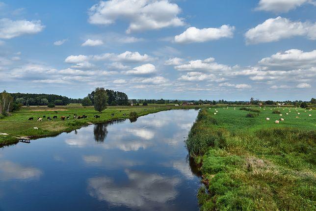 Rzeka Noteć jest drugą co do wielkości rzeką Wielkopolski
