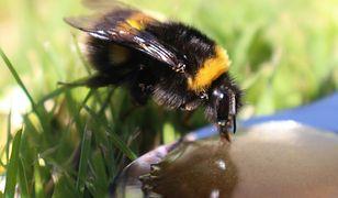 Warszawa. Na Woli może powstać łąka pełna motyli i pszczół