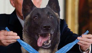 USA. Donald Trump chce zaprosić do Białego Domu psa, który brał udział w operacji przeciw Abu Bakr al-Bagdadiemu