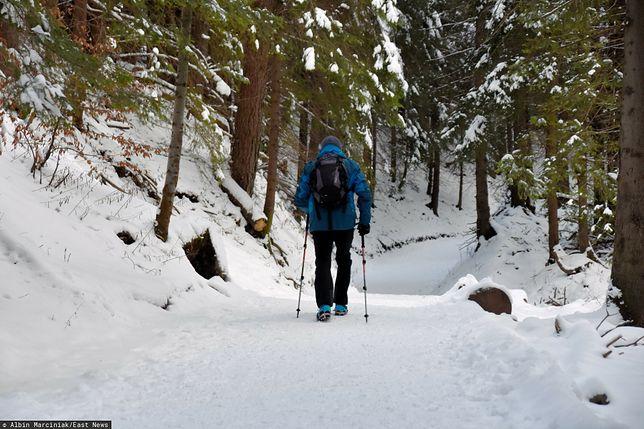 """Zagubiony niedźwiadek na szlaku w Tatrach. """"Strasznie się wydzierał"""""""