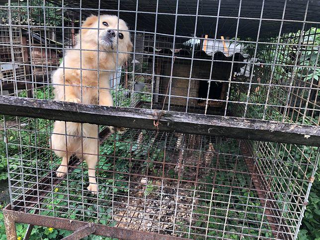 W lisich klatkach trzymane były też psy