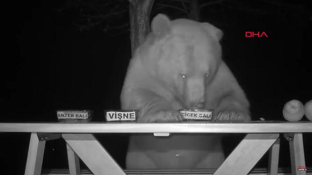 Niedźwiedzie w roli testerów miodu
