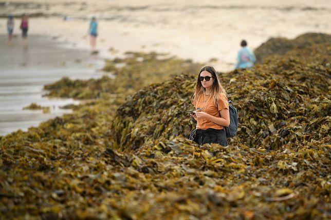 Plaża Coogee tonie w glonach. Turyści mają ciekawy plan zdjęciowy