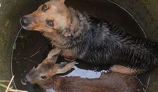 Przestraszone i wyziębione zwierzęta wpadły do 1,5-metrowej studni