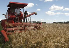 Kredyt klęskowy można uzyskać w celu odtworzenia produkcji rolnej po klęsce żywiołowej