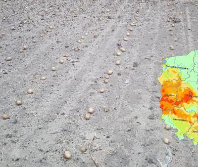 """Susza i wiatr niszczą uprawy. """"Wywiało ziemniaki, zniszczyło 100 hektarów buraka"""""""