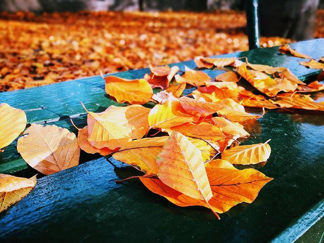 Pogoda na wtorek 19 listopada