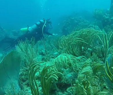 Huragany są zabójcze dla raf koralowych