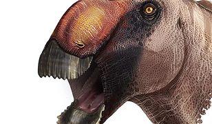 Naukowcy odkryli nowego dinozaura