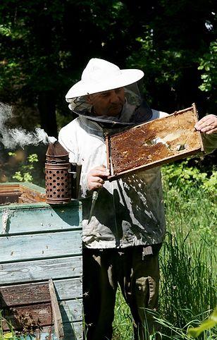 Żoliborz. Pszczoły zostały przeniesione z powodu choroby