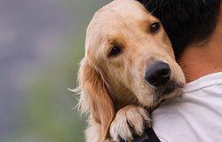 Psy potrafią wykryć raka prostaty. Ich skuteczność jest niesamowita