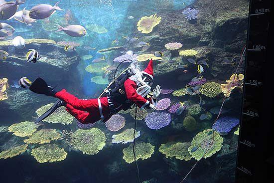Symbol Bożego Narodzenia pod wodą  - zdjęcia
