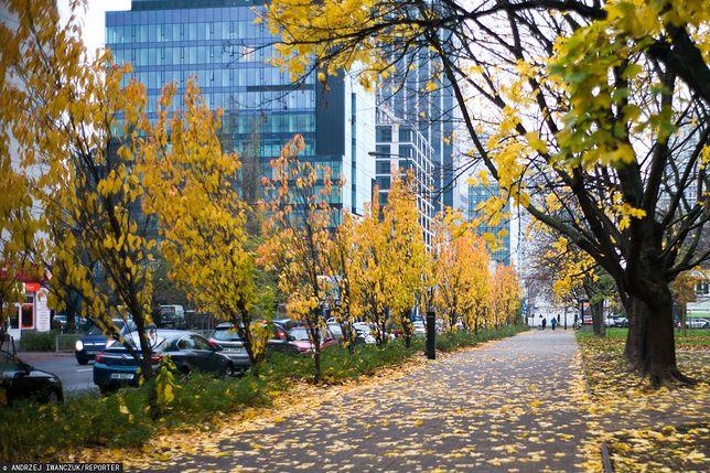 Warszawa wprowadza zakaz stosowania dmuchaw na terenach miejskich