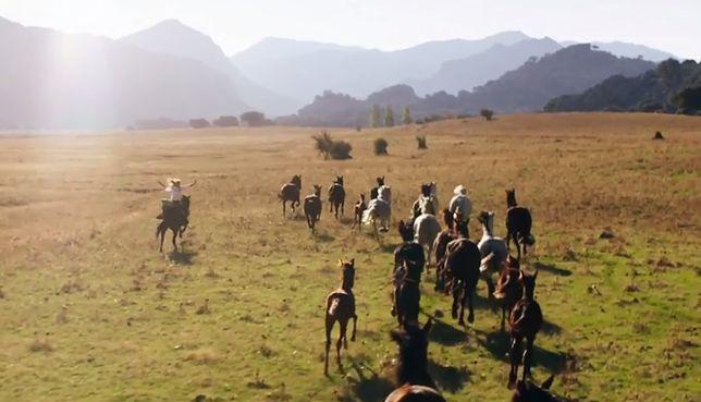 Wicher - dzikie konie (Ostwind 3: Aufbruch nach Ora)