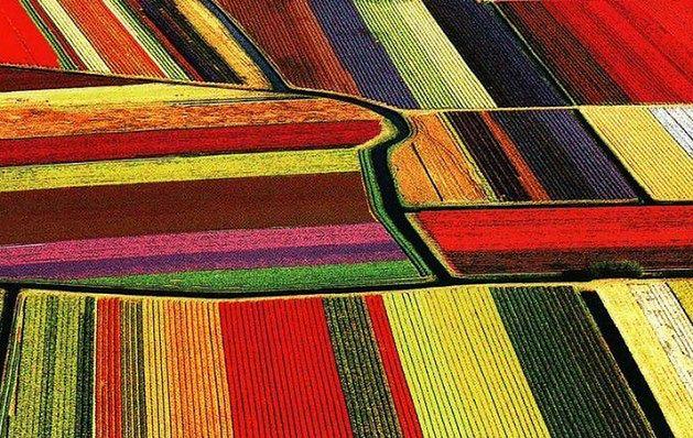 Holandia - w krainie tulipanów