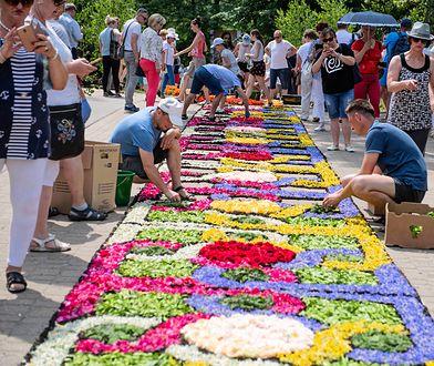 Tradycja układania dywanów kwiatowych ma ponad 200 lat