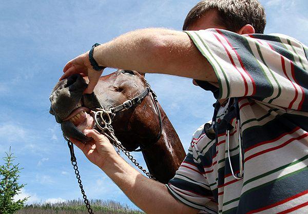 Koniec cierpienia koni na drodze do Morskiego Oka? Tatrzański Park Narodowy chce rozwiązać problem