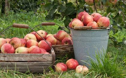 Rosja wprowadziła zakaz importu owoców i warzyw z Polski