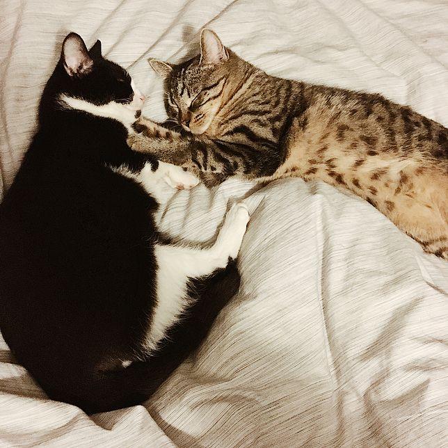Koty: Felix i Mimi