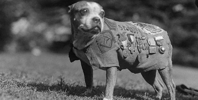 Sierżant Stubby - bohaterski pies żołnierz!