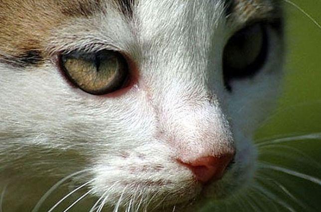 Sprawca, który dusił kota, odnaleziony. To gimnazjalistka