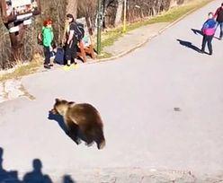 Słowacja. Horror w Tatrach. Między turystów weszła niedźwiedzica z młodymi