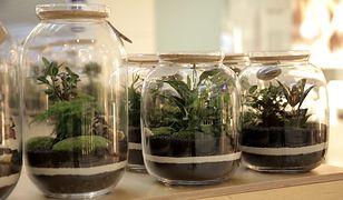 Pomysł na biznes: Las w słoiku
