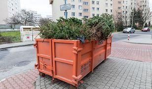 Choinka nie musi skończyć na śmietniku. Volvo sadzi las, a internauci zadecydują gdzie