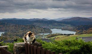 Coraz więcej turystów obiera Bieszczady na cel jesiennych wypadów